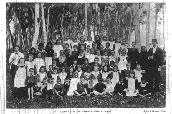 Kaihu School - Journal 13